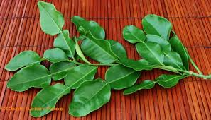 kafir leaves